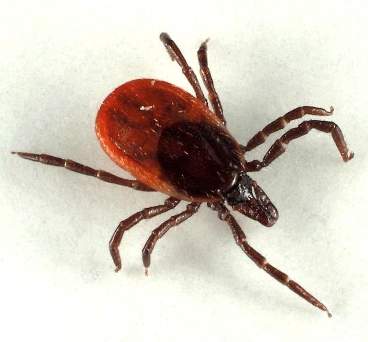диагностировать наличие паразитов в организме